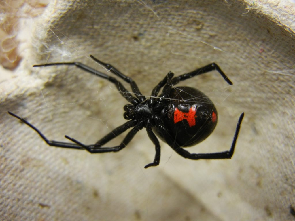 While You're Waiting: Black Widow